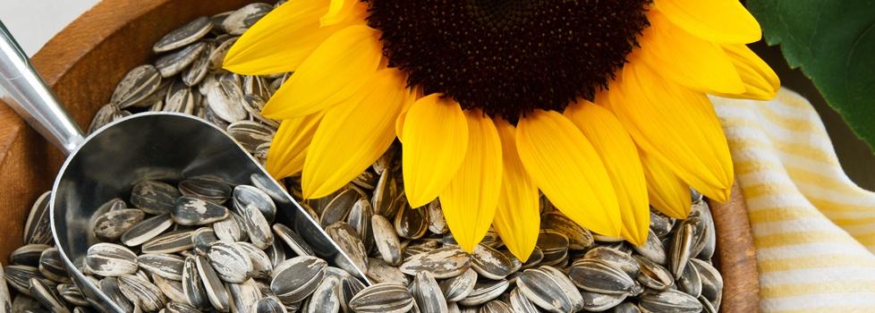 Organic Raw Sunflower Seeds Health